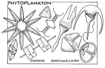 Phytoplankton and Zooplankton